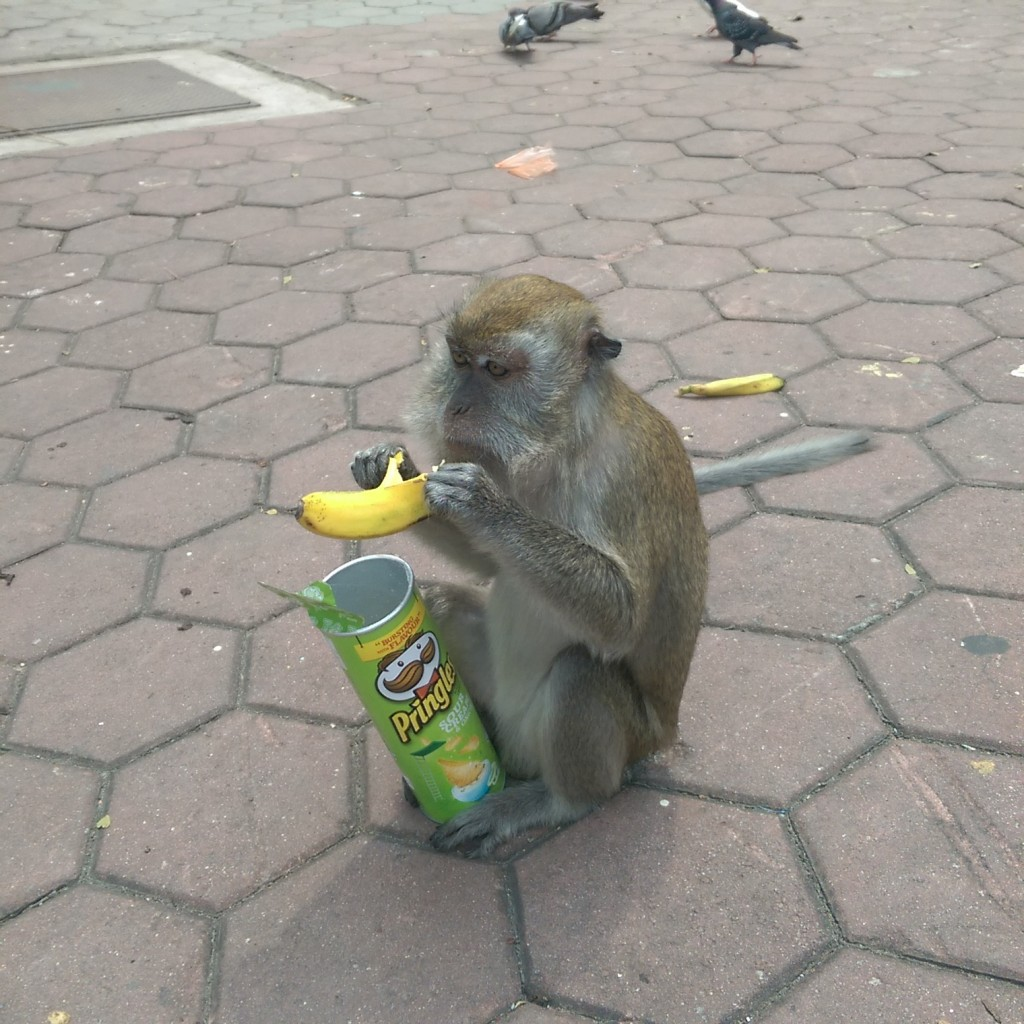 monkey with pringles