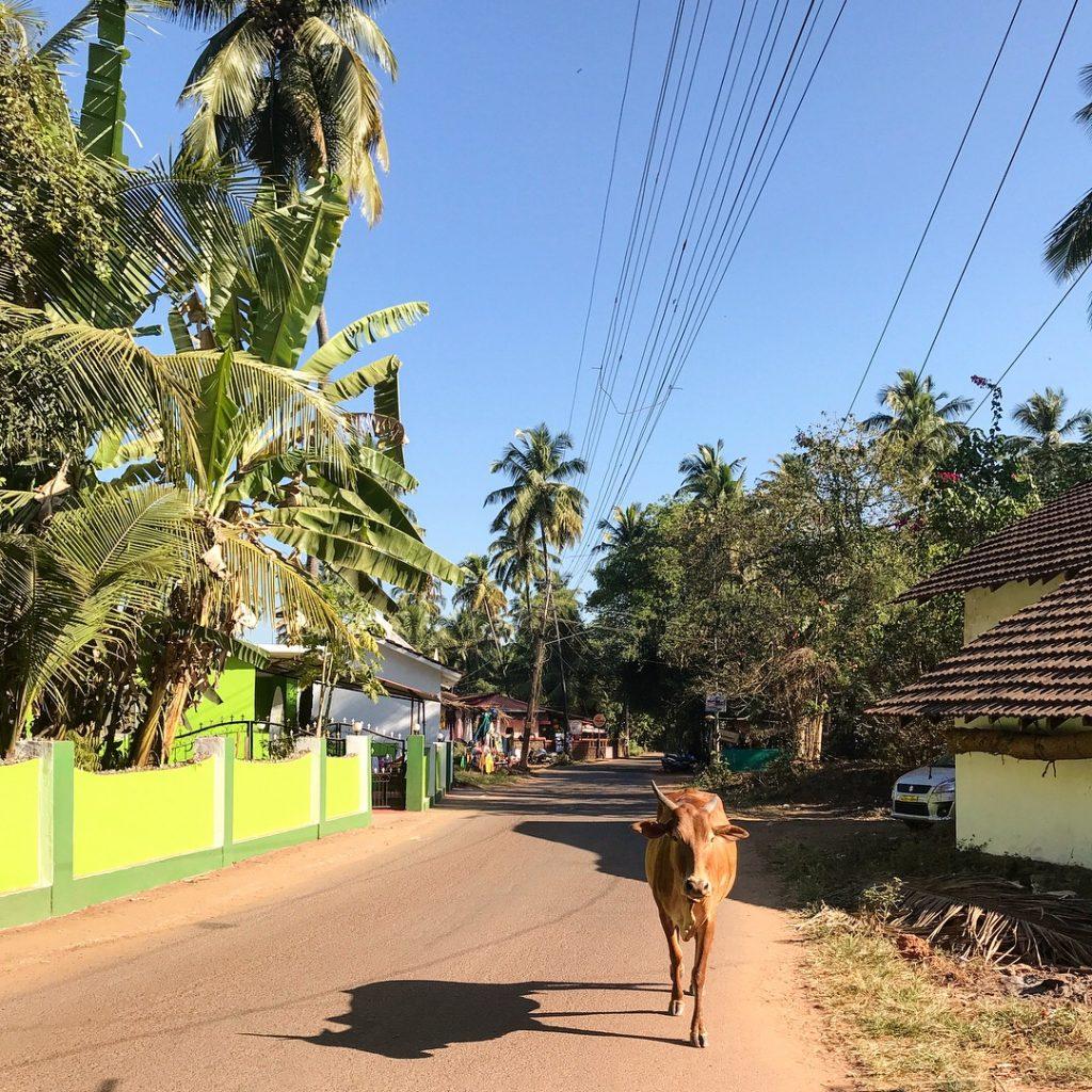 Sıradan Goa yolları