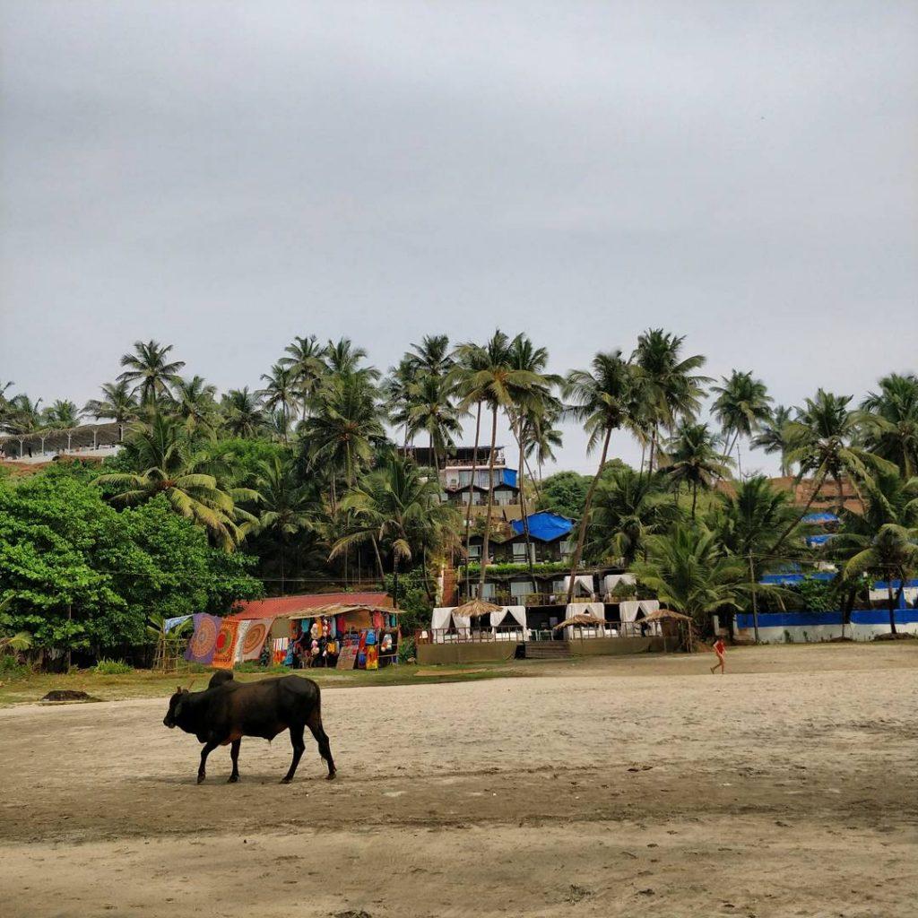 Ozran Beach, Kuzey Goa